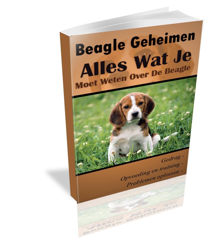 Beagle geheimen alles wat je moet weten over de beagle