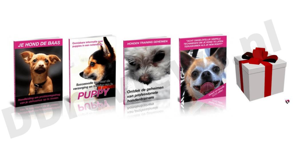 bonussen chihuahua handboek