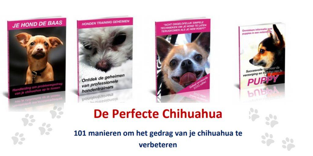 Chihuahua Handboek review gratis bonussen